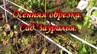 Виноград.Осенняя обрезка.Сад Зауралья.
