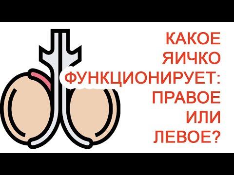 Какое яичко функционирует: правое или левое? / Доктор Черепанов