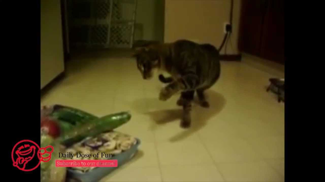 baron the cat returns