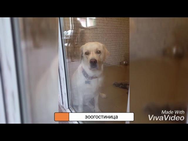 Зоогостиница в Покровке, Клинский район, МО
