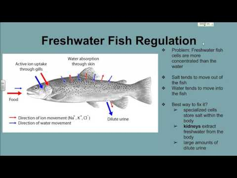 Fish And Water Regulation