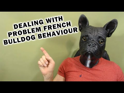 How To Deal with Problem French Bulldog Puppy Behavior