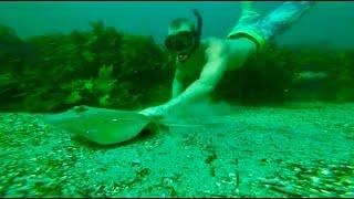 Catching sharks, free dive, spearfish & found passport