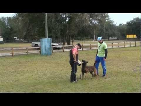 dog-training-video---taching-the-ipo/schutzhund-back-transport.