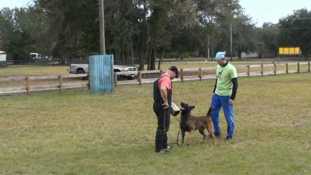Beginning ipo puppy training