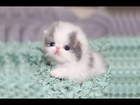 Cute kittens meowing compilation | Funny kitten video  | Kitten meowing #10
