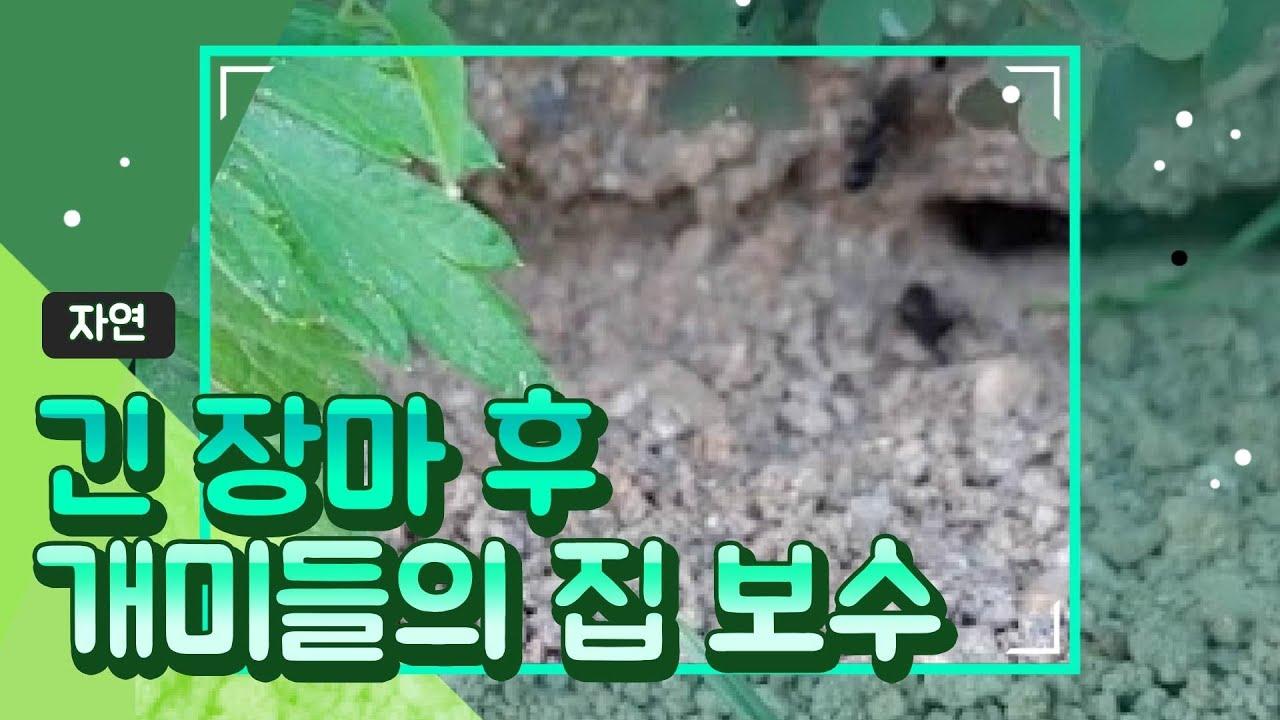 개미들의 집 보수