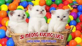 Si Meong Kucing Lucu Bermain Bola Lagu Anak Terpopuler
