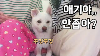언니들이 붙어있을때 애기반응 (feat.질투쟁이) 진돗…