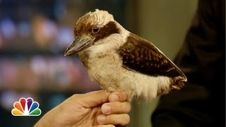 Jeff Musial: Laughing Kookaburra, North American Opossum (Jimmy Fallon)