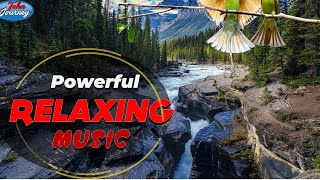 Powerful Relaxing Music Therapy Energy Field Music for How to Reduce Stress | Teha Journey