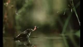 sapo vs mosca