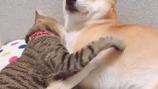 💖 Cute is Not Enough 💖   Funny Cats and Dogs Compilation #17