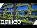 Die abgefahrensten Gärten weltweit  Galileo  ProSieben