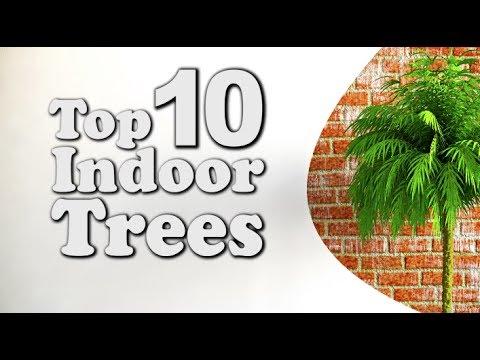 Top 10 Indoor Trees