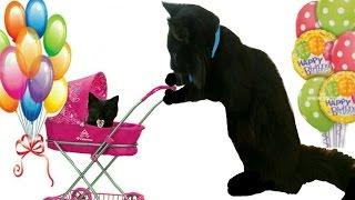 #1.Самый ЛУЧШИЙ ПАПА-Кот на Свете!Ура!У Нас Родились Котята!Роды у Кошки.Birth Of a Cat 小貓出生了