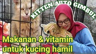 Makanan Dan Vitamin Untuk Kucing Hamil Agar Kitten Gimbul Dan Sehat Miu Meow Youtube