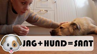 JAG + HUND = SANT   vlogg