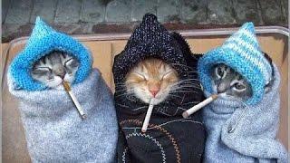 СМЕШНЫЕ КОТЫ ПРИКОЛЫ/ ТОПовая подборка 2016 ПРИКОЛЫ С КОШКАМИ FUNNY CATS Смешные моменты(CatsLive)