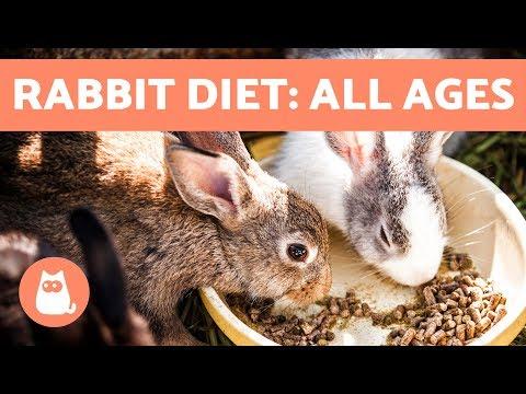 Feeding Rabbits – Best Diet For Baby, Adult & Elderly Bunnies