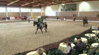 European Championship for Sport Arabians Horses