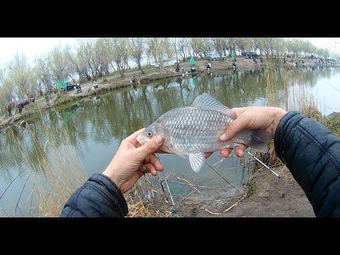 Рыбалка.  Почти апрель. Карась и тарань