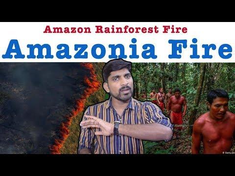 #PrayForAmazonia   Amazon Rainforest Fire   Pray For Amazonia   Tamil Pokkisham   Vicky   TP