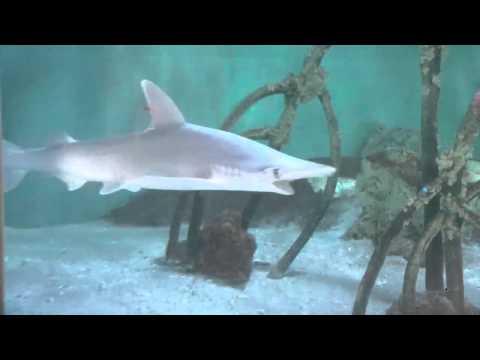 Reef Aquarium HD - HD Aquariums For Mac OS X
