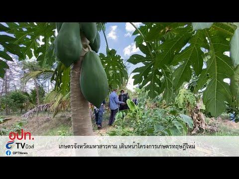 เกษตรจังหวัดมหาสารคาม เดินหน้าโครงการเกษตรทฤษฎีใหม่