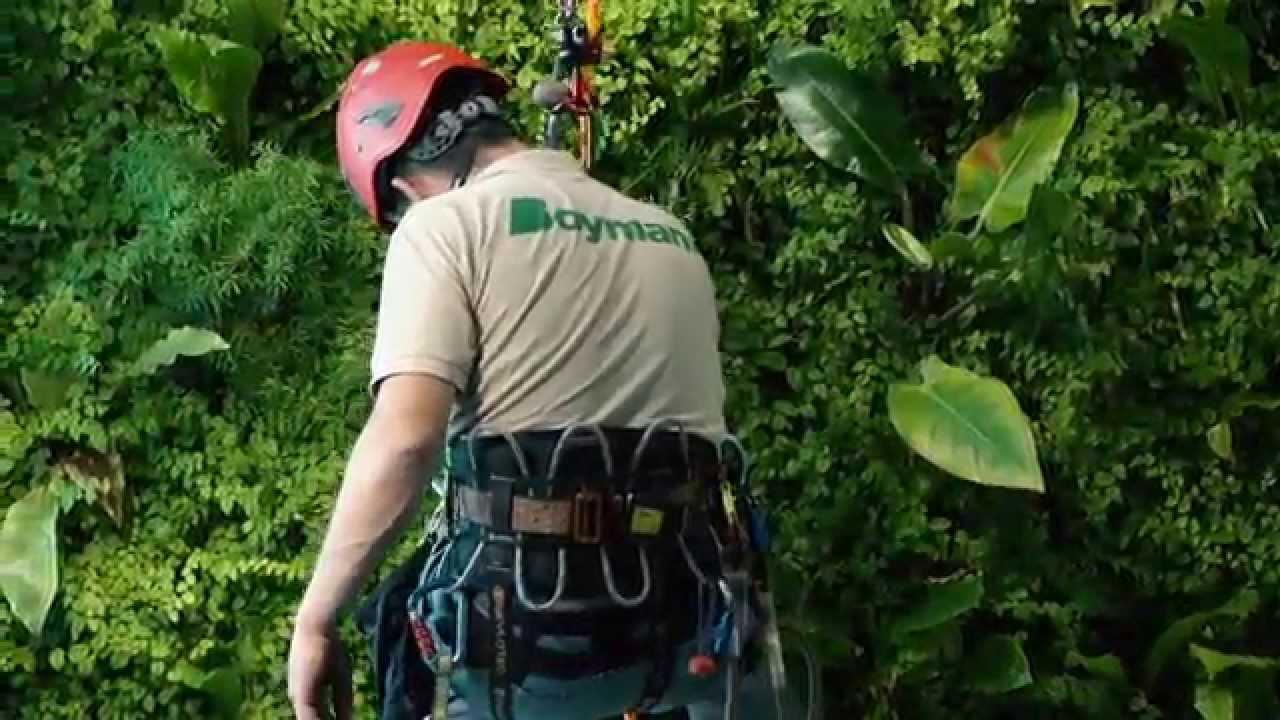 Boymann Pflege Vertikalbegrünung