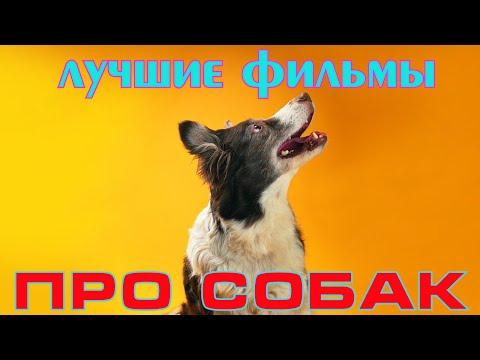Семейные фильмы про собак - Ruslar.Biz