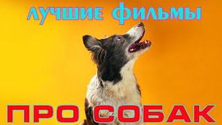 Семейные фильмы про собак