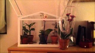 My Indoor Greenhouse/terrarium