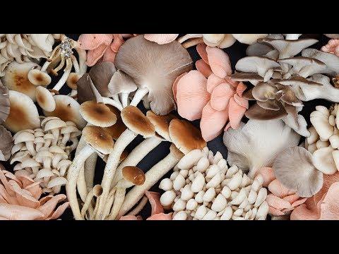Top 5 Reasons to Eat More Mushrooms