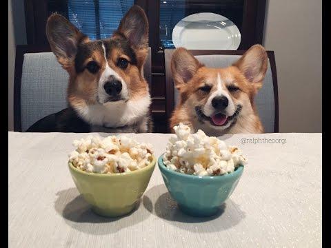 Corgis Celebrate National Popcorn Day