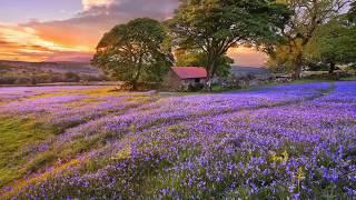 Красота природы мира. Музыка Игоря Двуреченского. Томление. Very beautiful music.