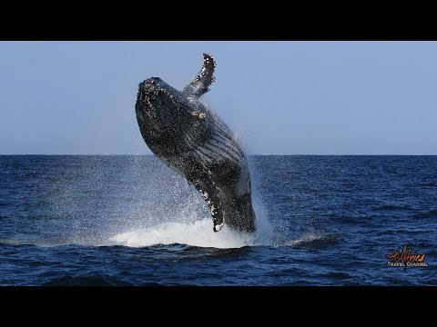 Advantage Tours - St. Lucia Whale Watching Trips - Africa Travel Channel