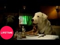 Hollywood Tails: Dogs Parody: The Greatest Movie of All Time, The Godfather | Lifetime