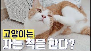 고양이가 많이 자는 건, 집사가 귀찮기 때문?