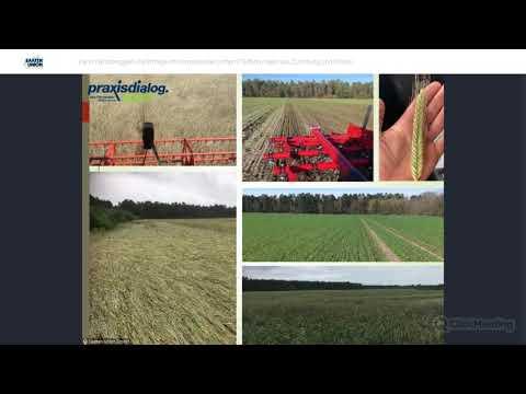 praxisdialog.agrar: #05   Kann Hybridroggen die Erträge im Klimawandel sichern?