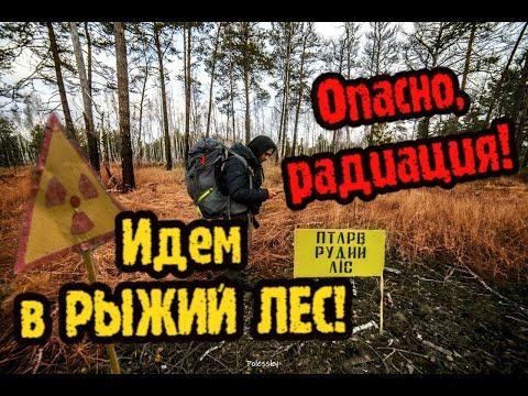 Идём в Припять через Рыжий лес, поход в Чернобыльскую зону часть 2