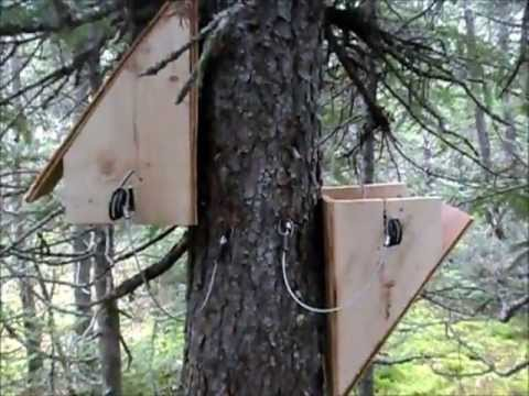Marten Trapping Begins