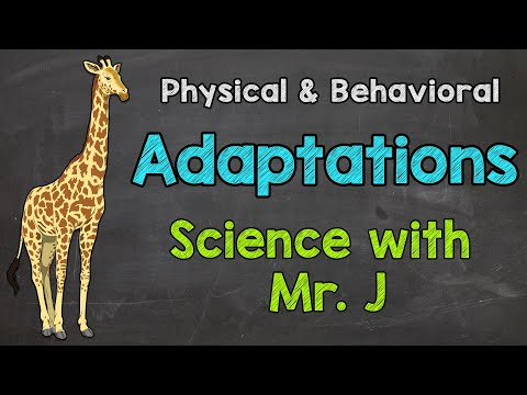 What Are Adaptations? | Physical Adaptations & Behavioral Adaptations