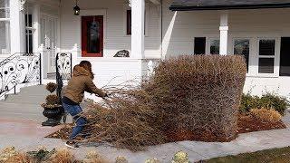 No More Ugly Privet Hedge! 🙌💃🤸♀️👏// Garden Answer