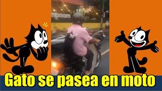 Gato se pasea en moto con su dueño