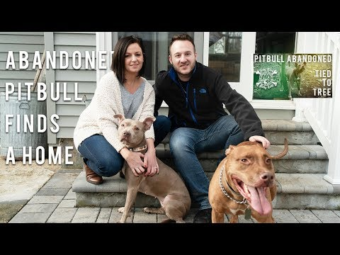 Abandoned Pitbull Finds a Loving Home | New York Bully Crew