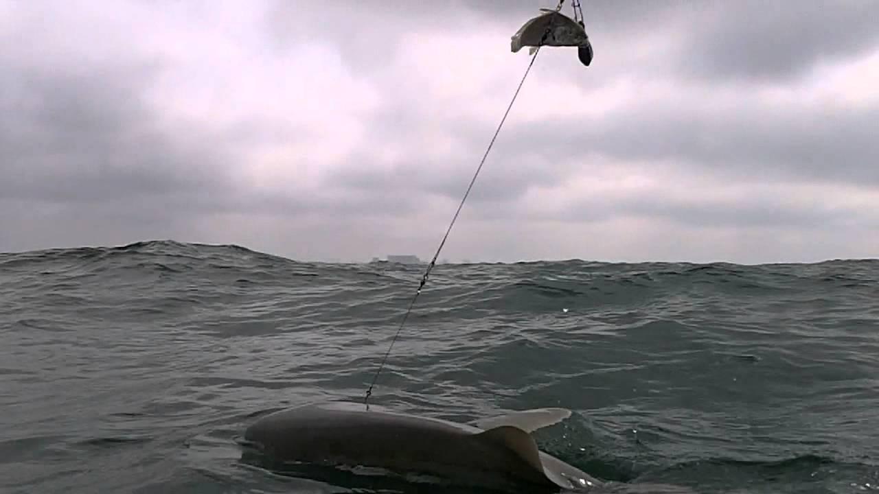 Myrtle Beach Kayak Sharks 1
