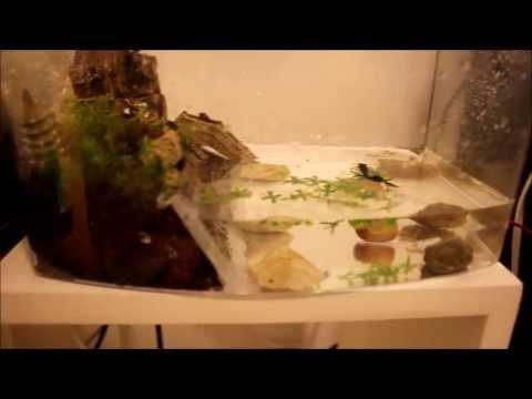 How To Setup a Semi Aquatic Newt Tank (efts)