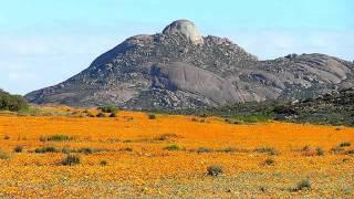 Le Chili   Atacama le desert des fleurs