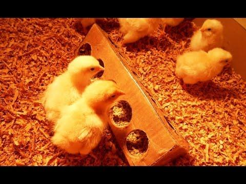 DIY Homemade Chick Feeder